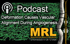 Deformation Causes Vascular Alignment During Angiogenesis